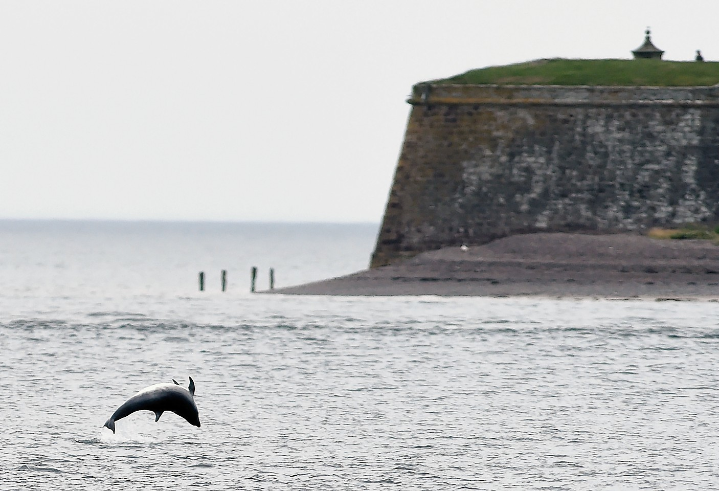 Chanonry Point.  Picture by Sandy McCook.