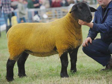Graeme Christie's Suffolk champion