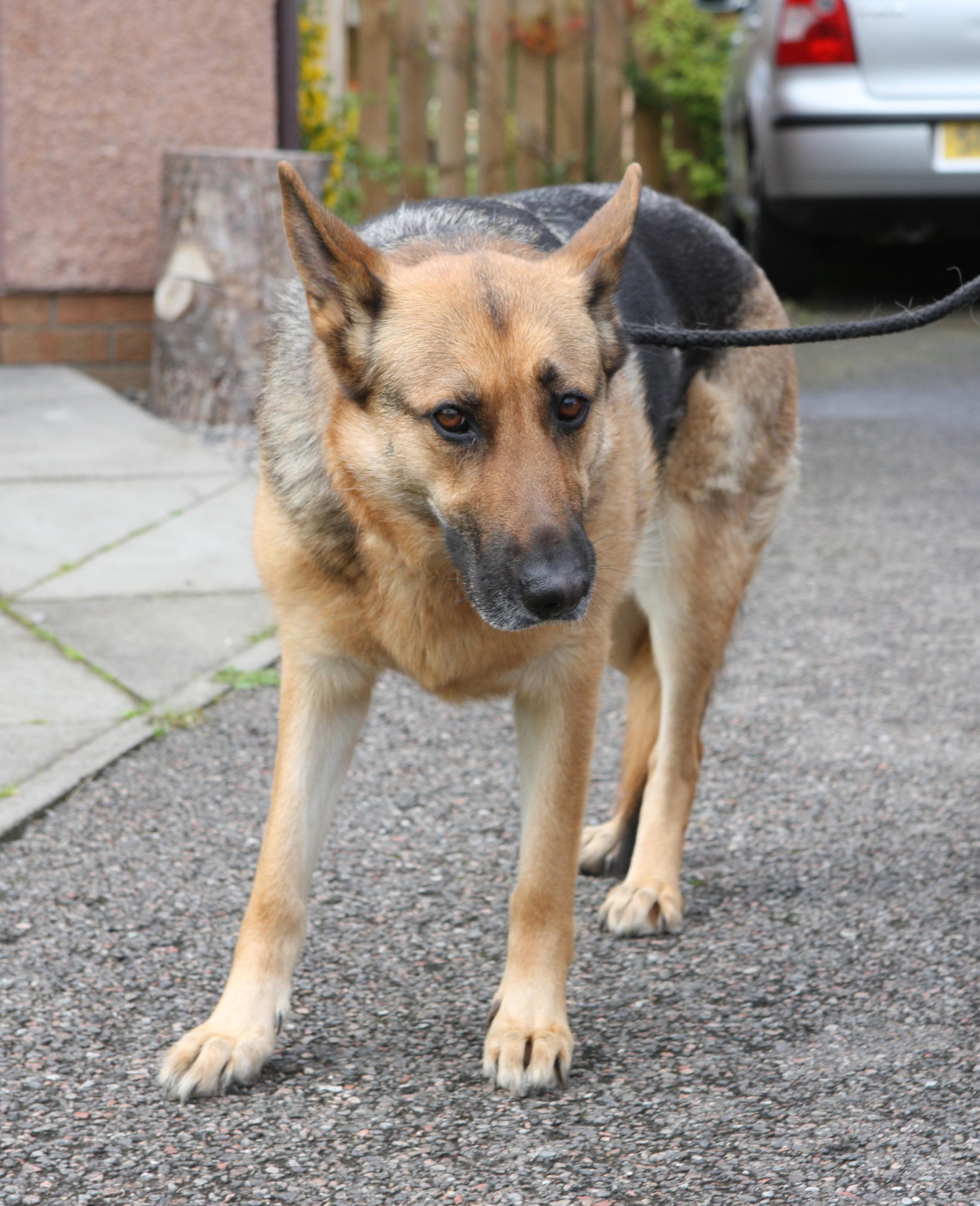 The dog that was rescued from the Muir of Ord house fire