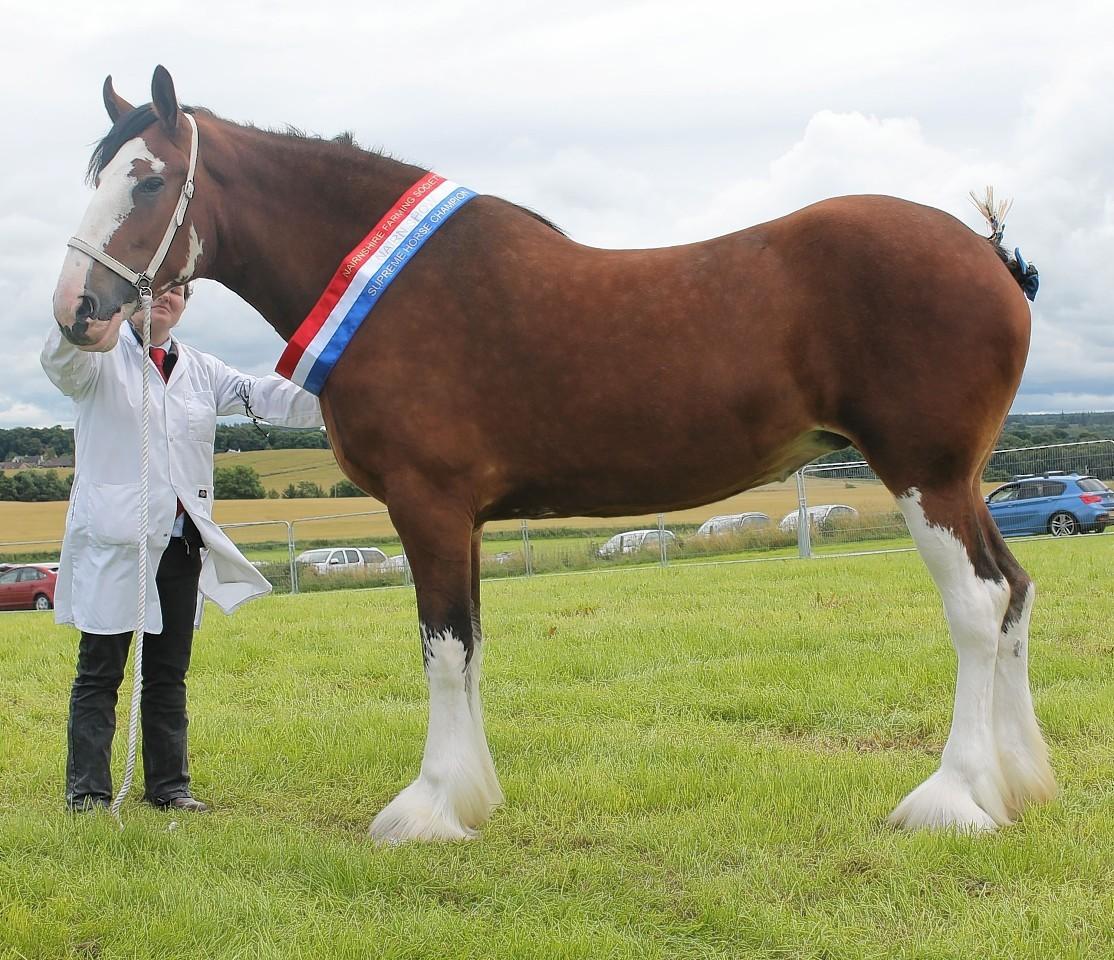 Kilmaclasser Bonnie Lily stood champion of champions