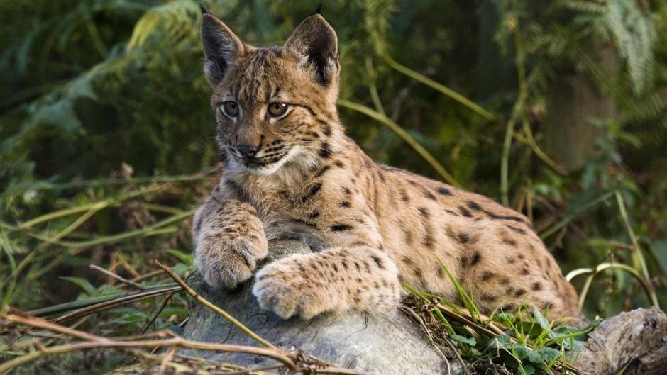 (PA/Lynx UK Trust)