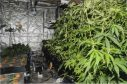 Cannabis cultivations, including those on an industrial scale, have been discovered across the north and north-east of Scotland