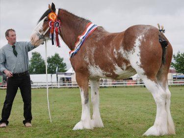 The native horse champion