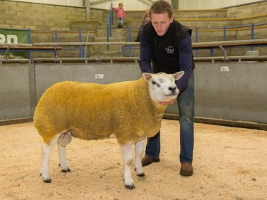 The Texel champion which sold for £1,000