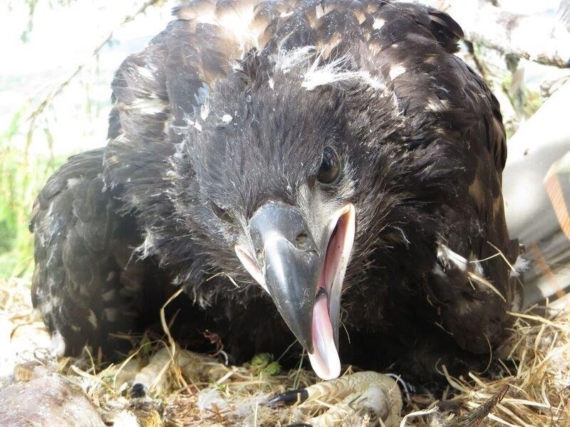 Chick at West Ardhu, photo by Lewis Pate
