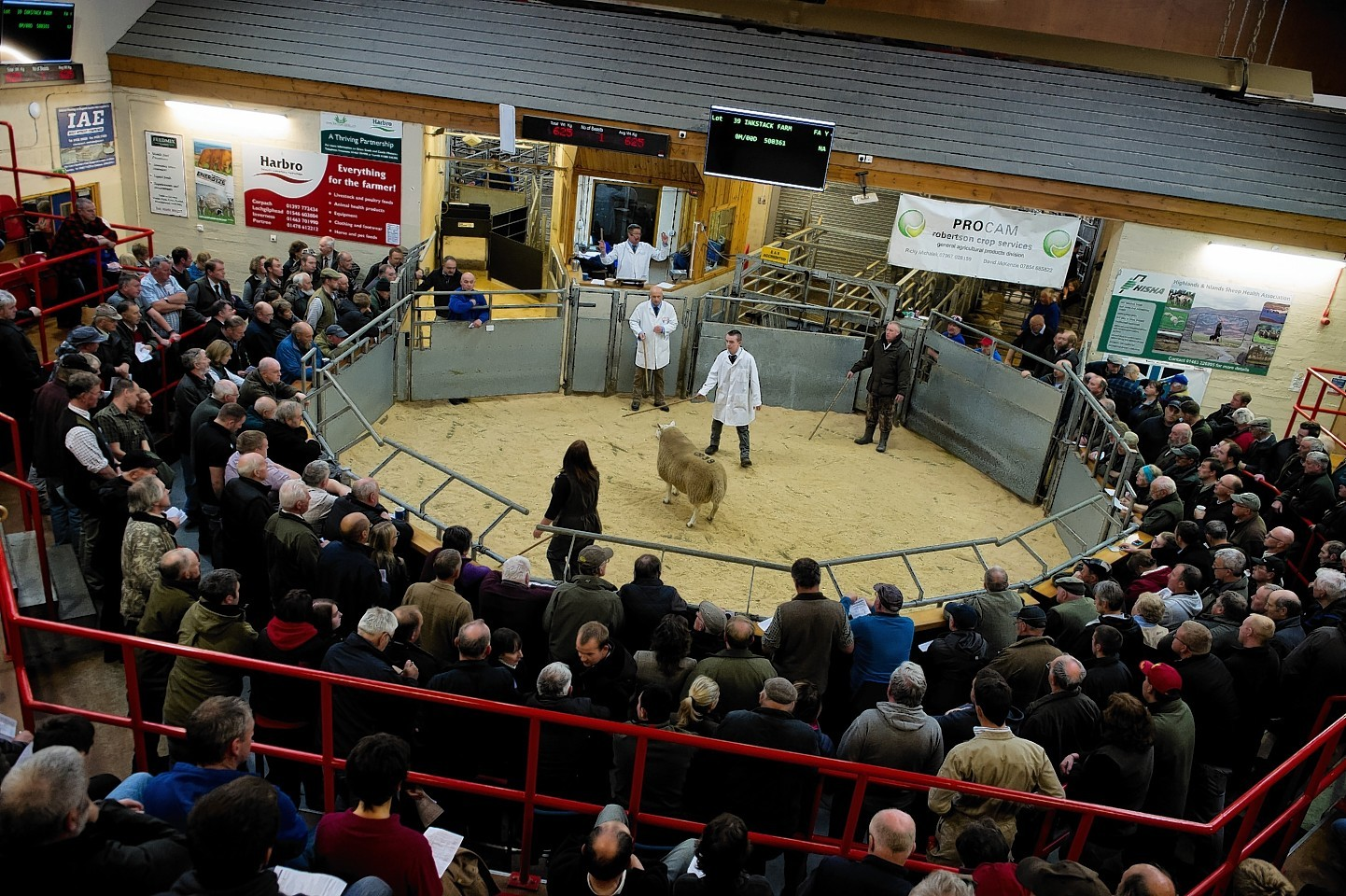 A ram goes through the ring at last year's sale.
