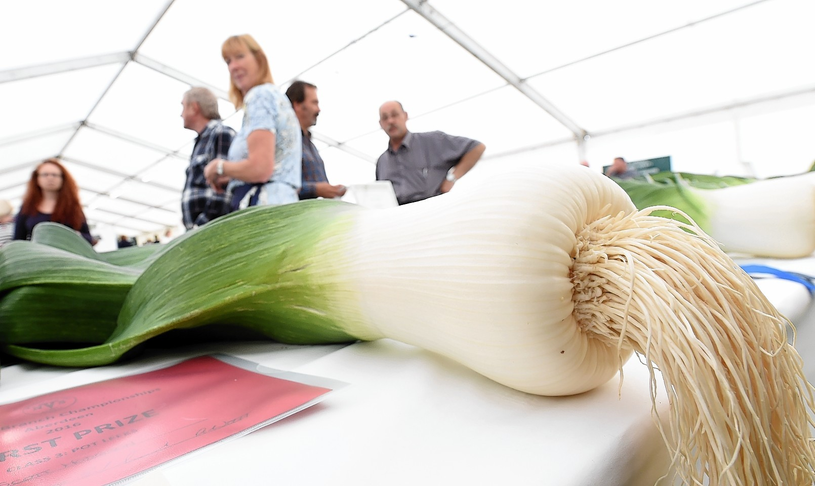 A north-east flower show is in danger