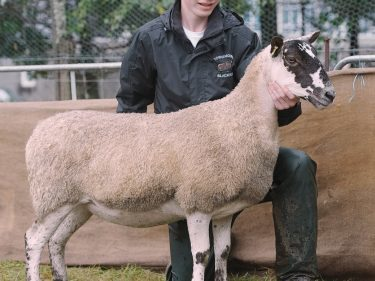 Lewis Smith's Mule gimmer