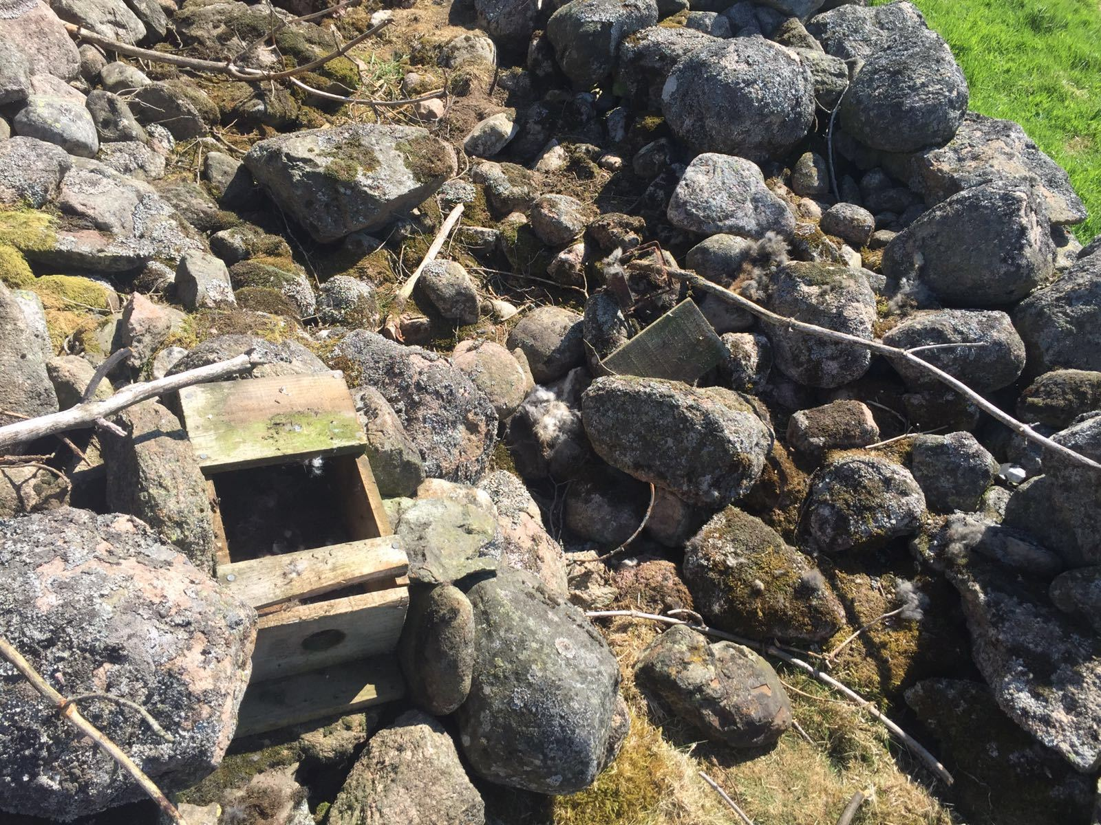 One of the legally-placed traps on a Aboyne grouse shooting estate that was tampered with