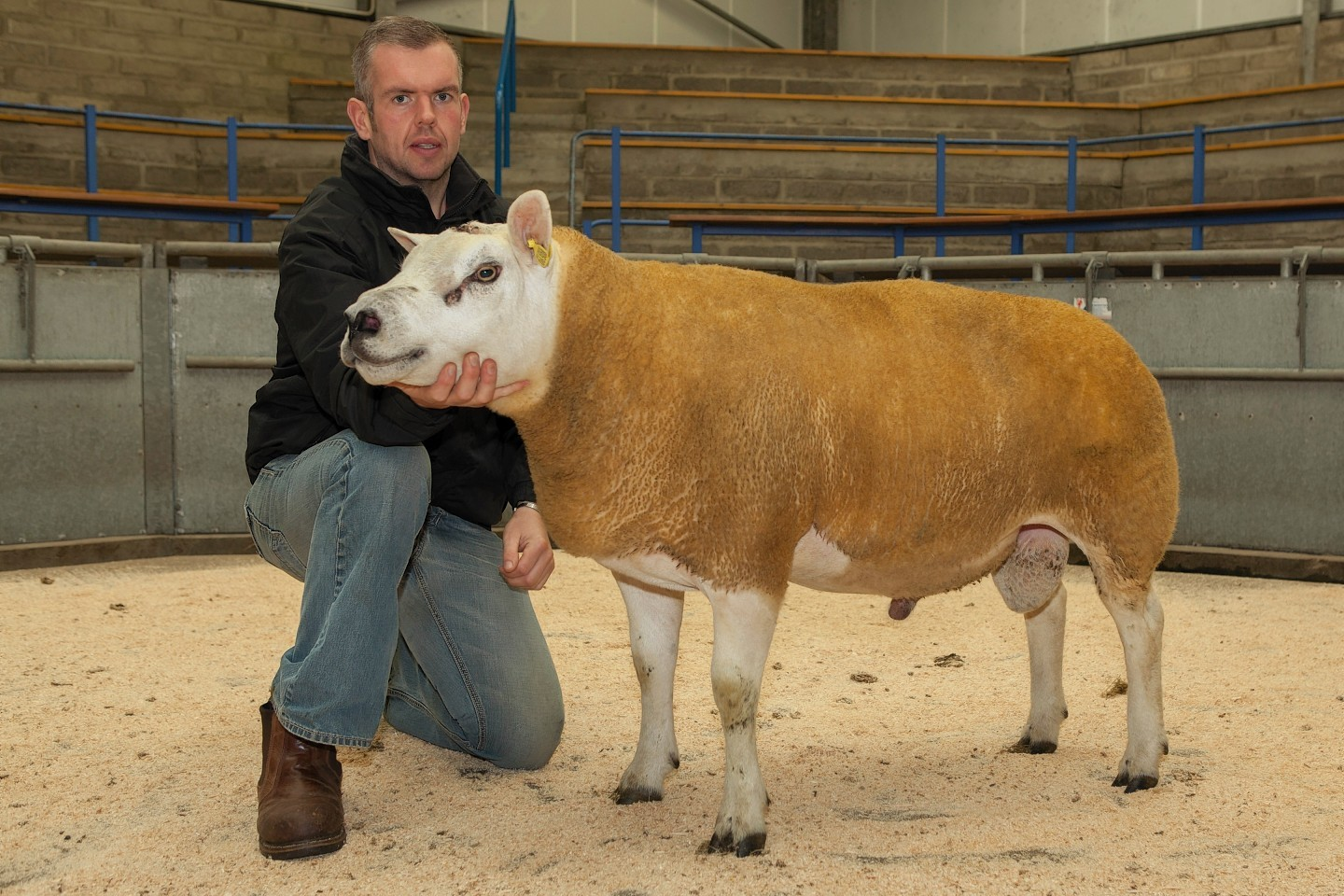 The Texel champion from last year's sale
