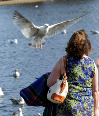 Calls have been made for residents to stop feeding the birds in Elgin's Cooper Park.