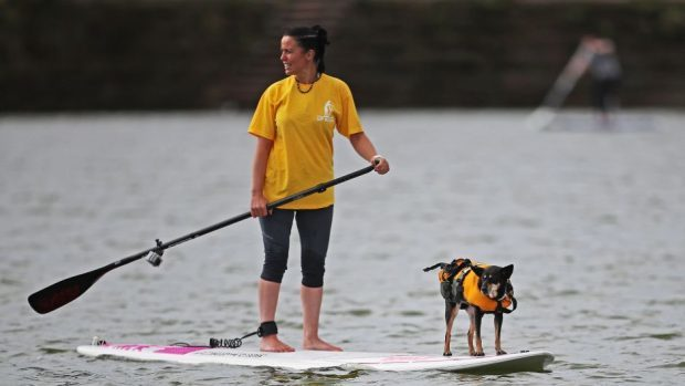 A paddleboarder and her dog on a lake