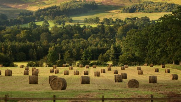 STFA said the ruling was a partial victory for tenant farmers.