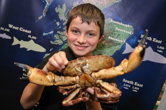 Ford McEwen, 12, with a large live crab.