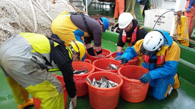 Sorting out the herring