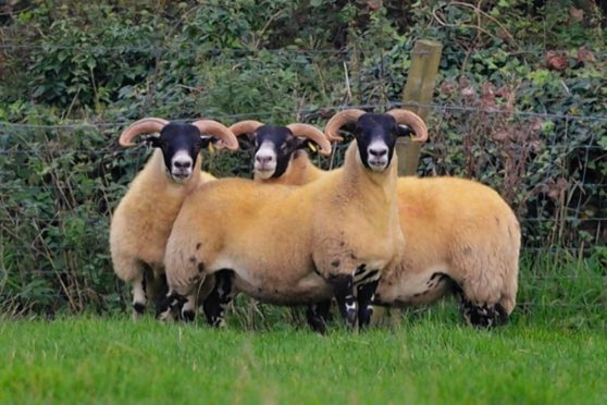 The record-priced Cairness gimmers