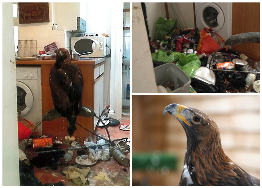 RSPCA pictures of the eagle which was kept in a kitchen
