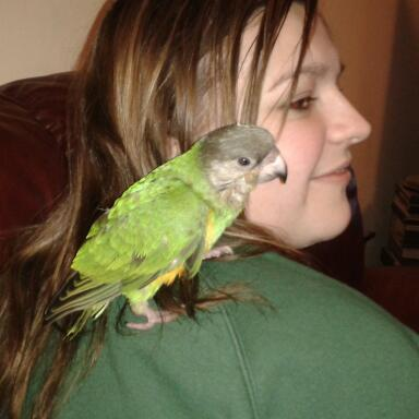 Jessie the parrot has gone missing from Ballater