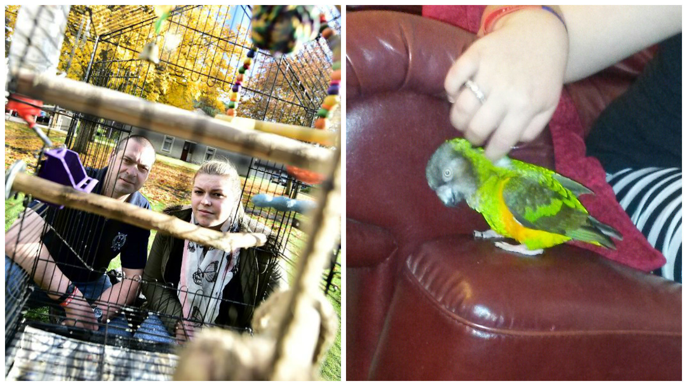 Jessie the parrot has been missing for three days