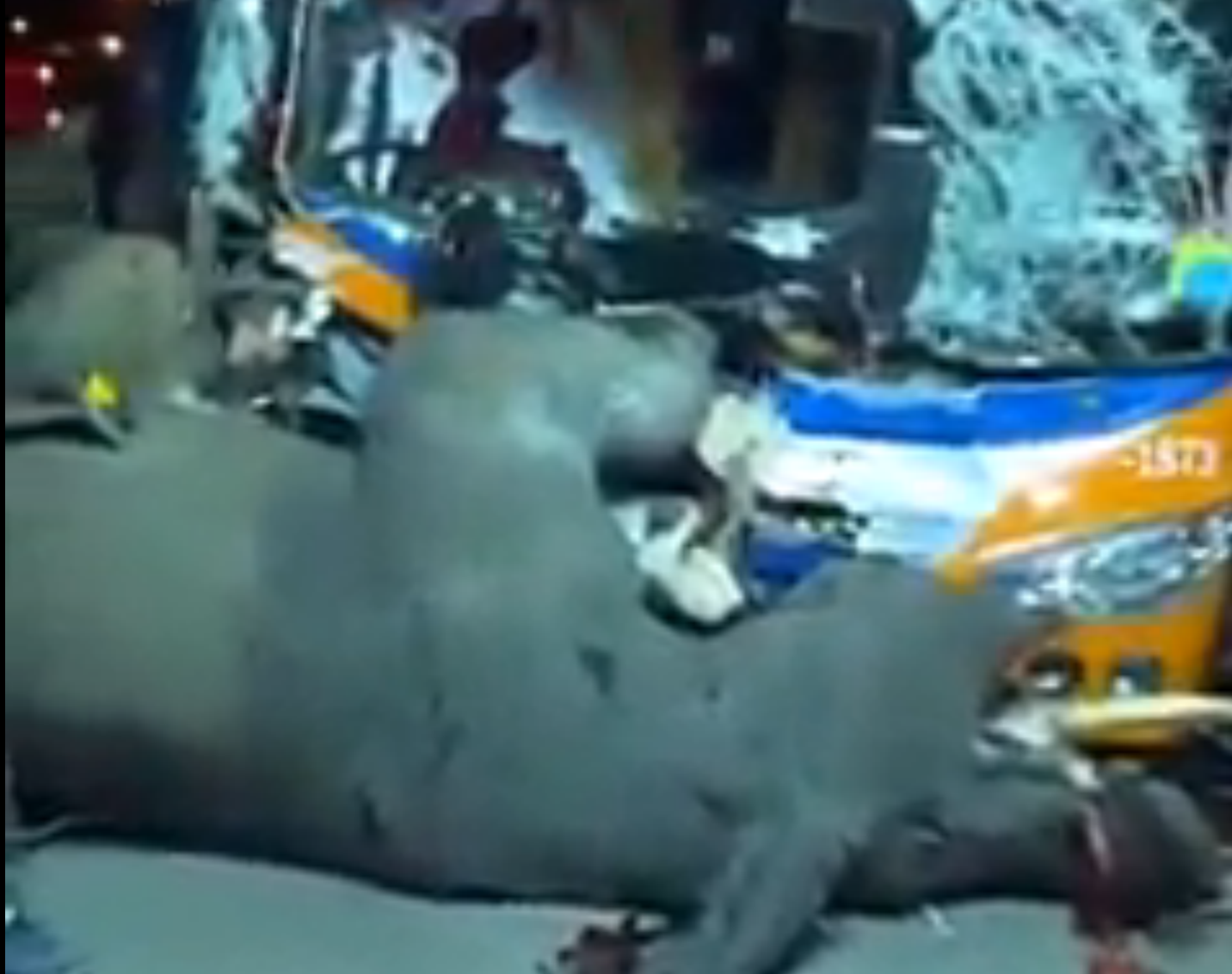 The elephant was hit on a motorway in Thailand