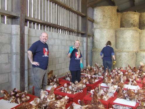 "The British Hen Welfare Trust appeals to ""kind-hearted"" members of the public to save hundreds of caged hens"