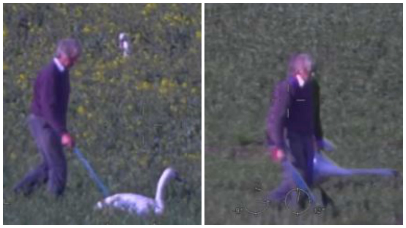 David Thompson, 80, was caught on a helicopter's video camera chasing the majestic birds across his fields of rapeseed