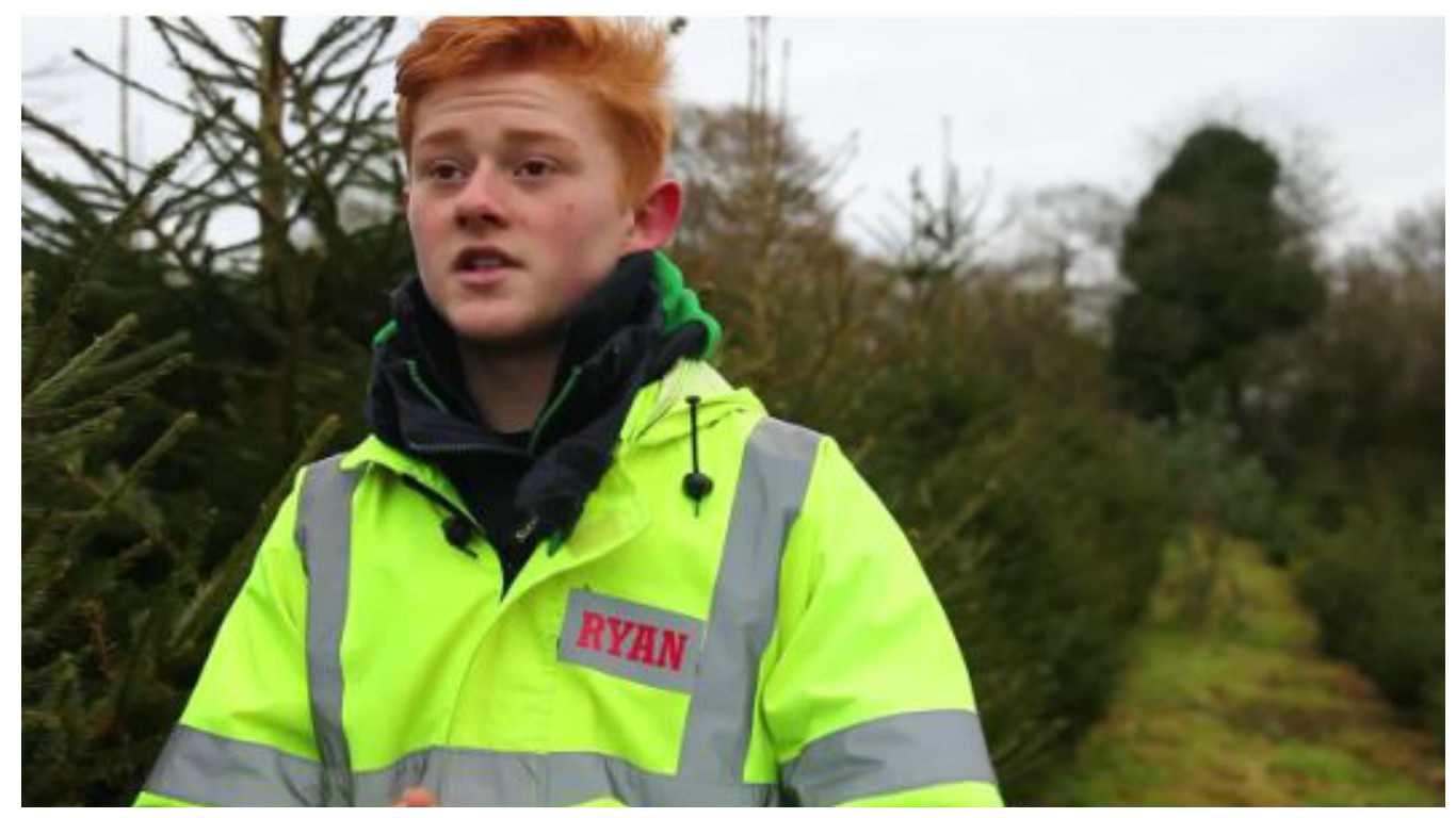 Ryan currently has around 1,500 trees growing on the family's land at Dean, nr Shepton Mallet, Somerset