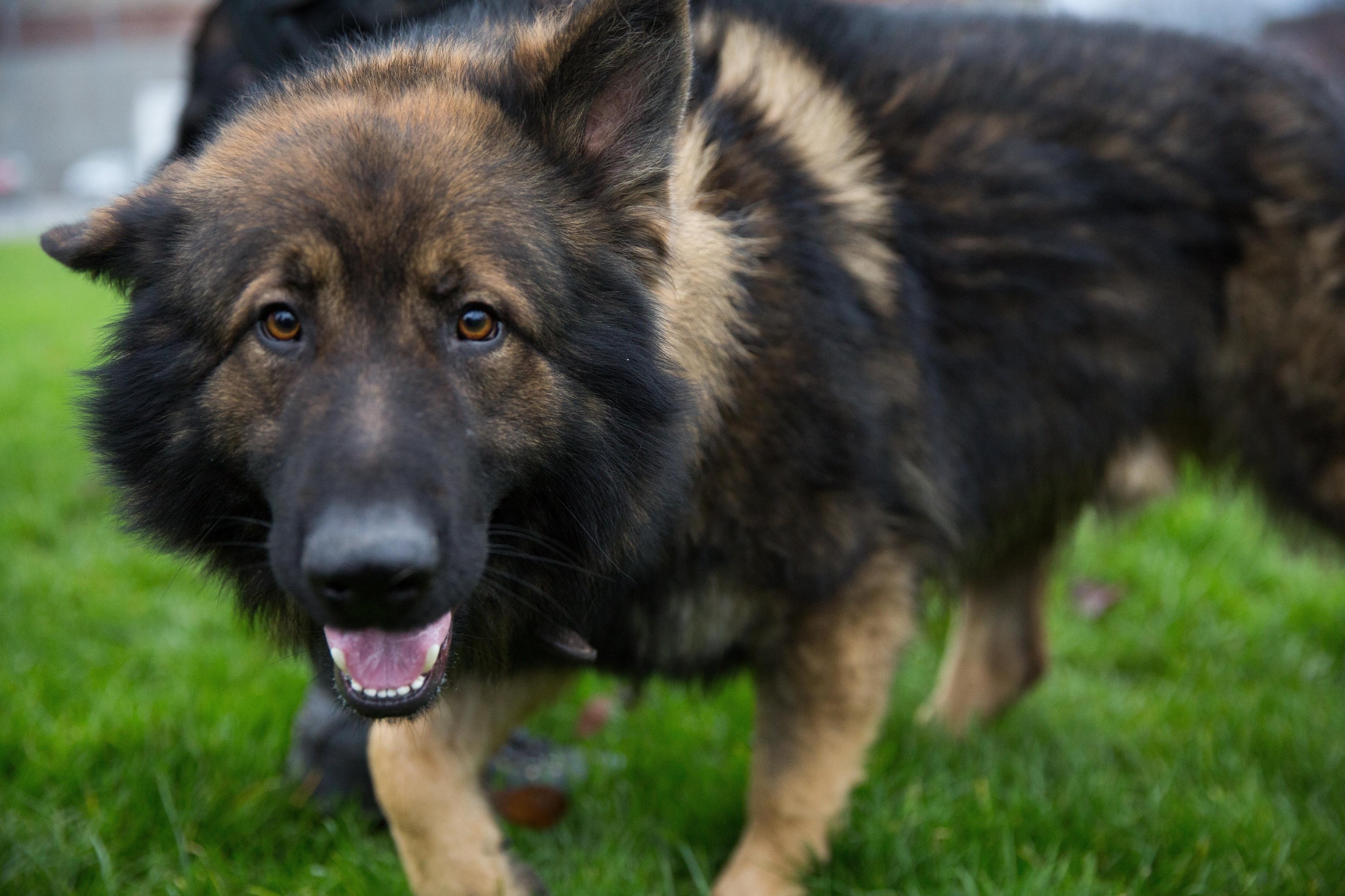 Griff is the north-east's  newest police dog, Griff,