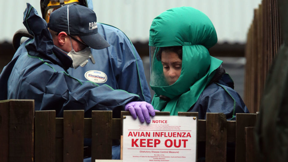 The latest case of bird flu was found in a wild duck