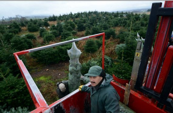 Trees for the harvest