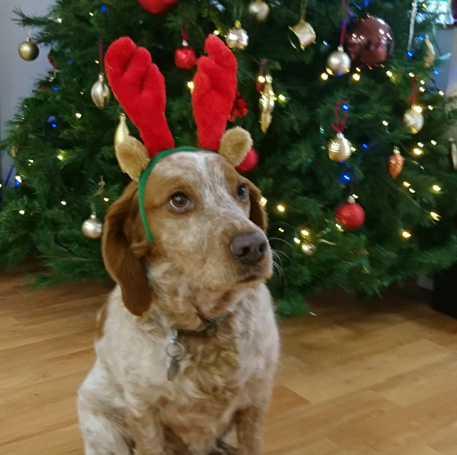 William the five-year-old spaniel is a firm favourite with residents and staff