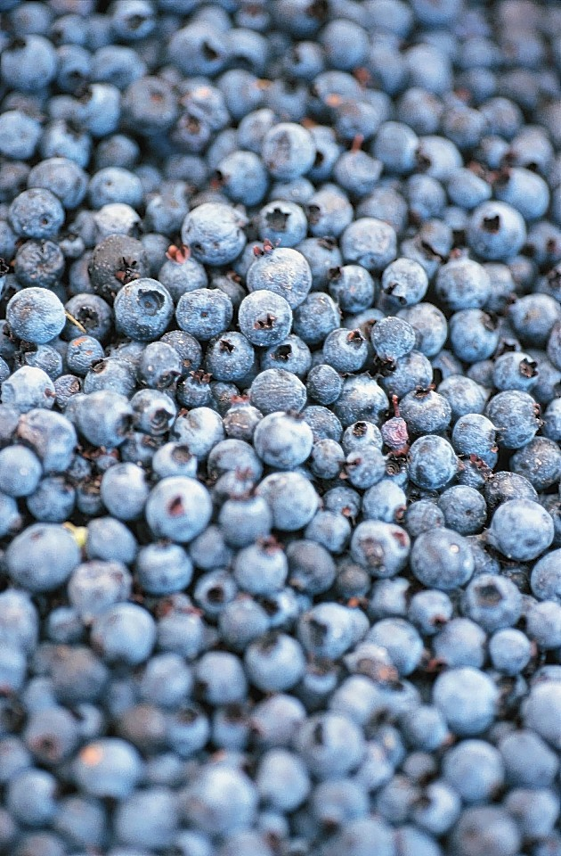 Scottish farmers grew 10% more blueberries last year