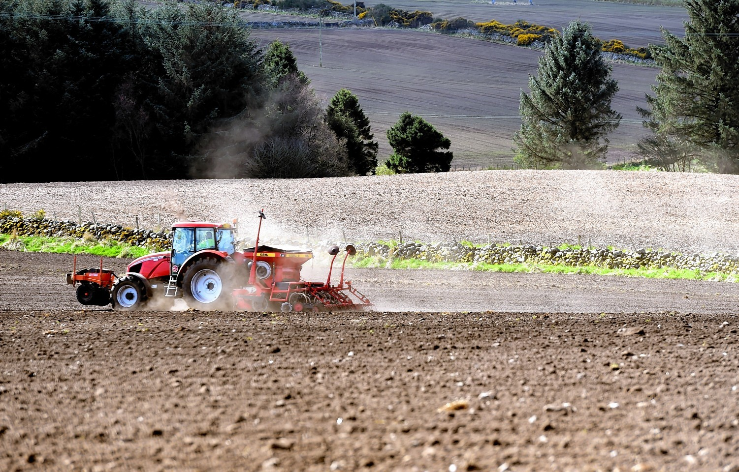 Farmers have sown a similar amount of barley to last year.