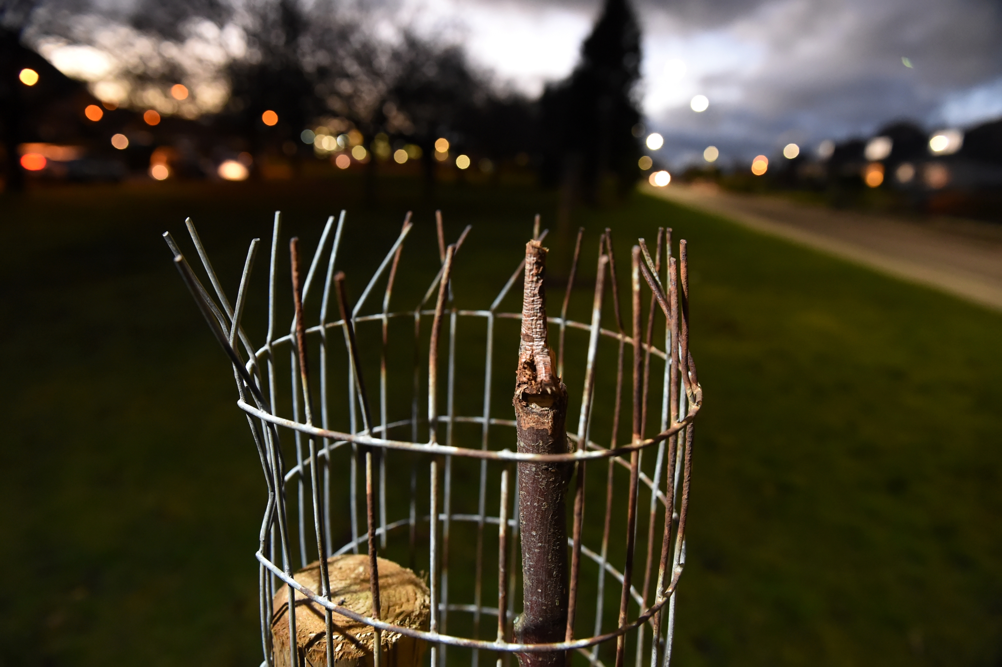 Locator of vandalised trees on Miltonfold, Bucksburn.  Picture by Kenny Elrick.