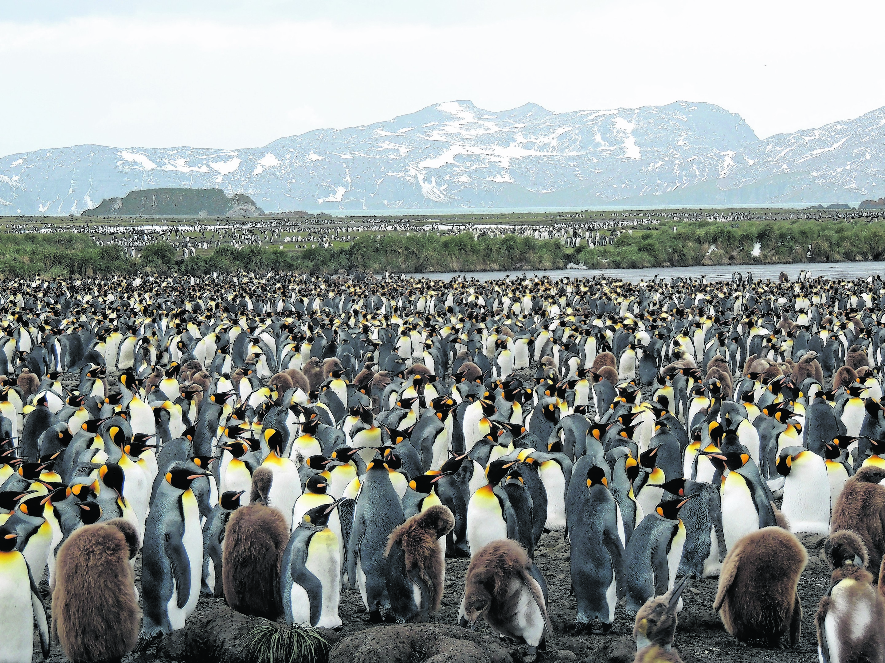 yl-antartica10