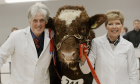 Jack and Grace Ramsay with their champion bull