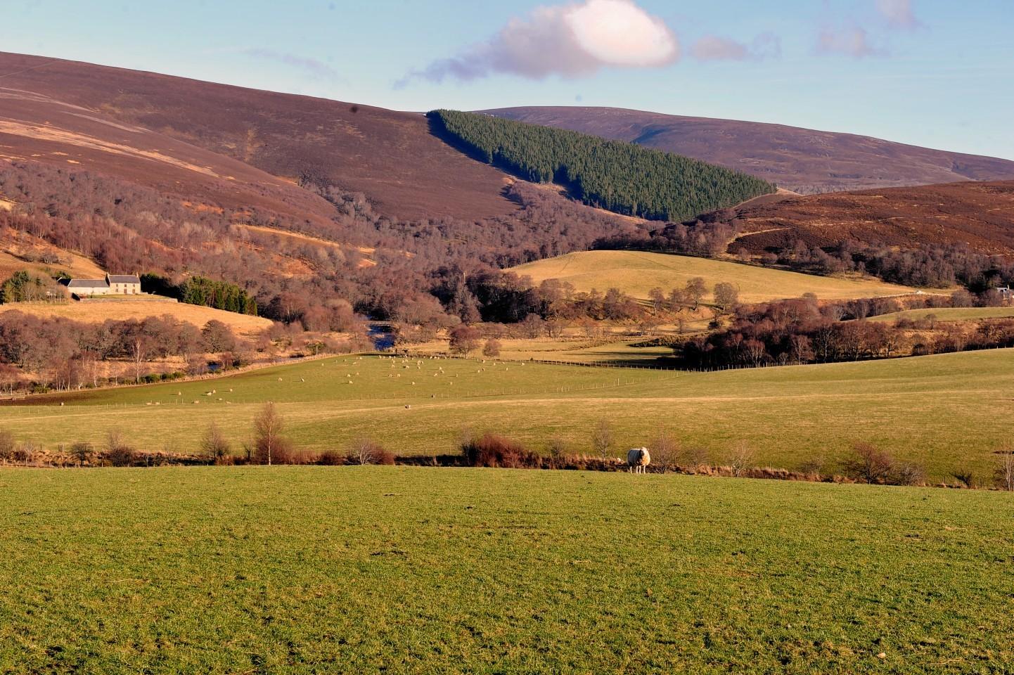 Glenlivet is one of four estates on the Crown Estate in Scotland.