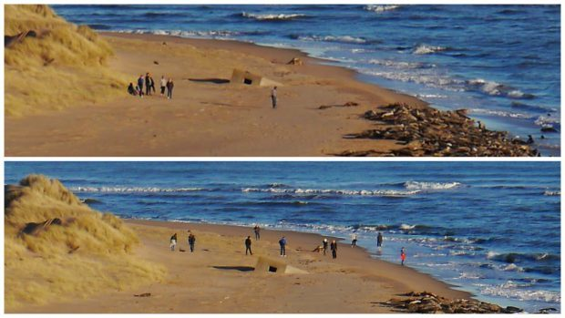 Walkers breaching the rules at the Ythan Estuary. Pics by Michael Wood.