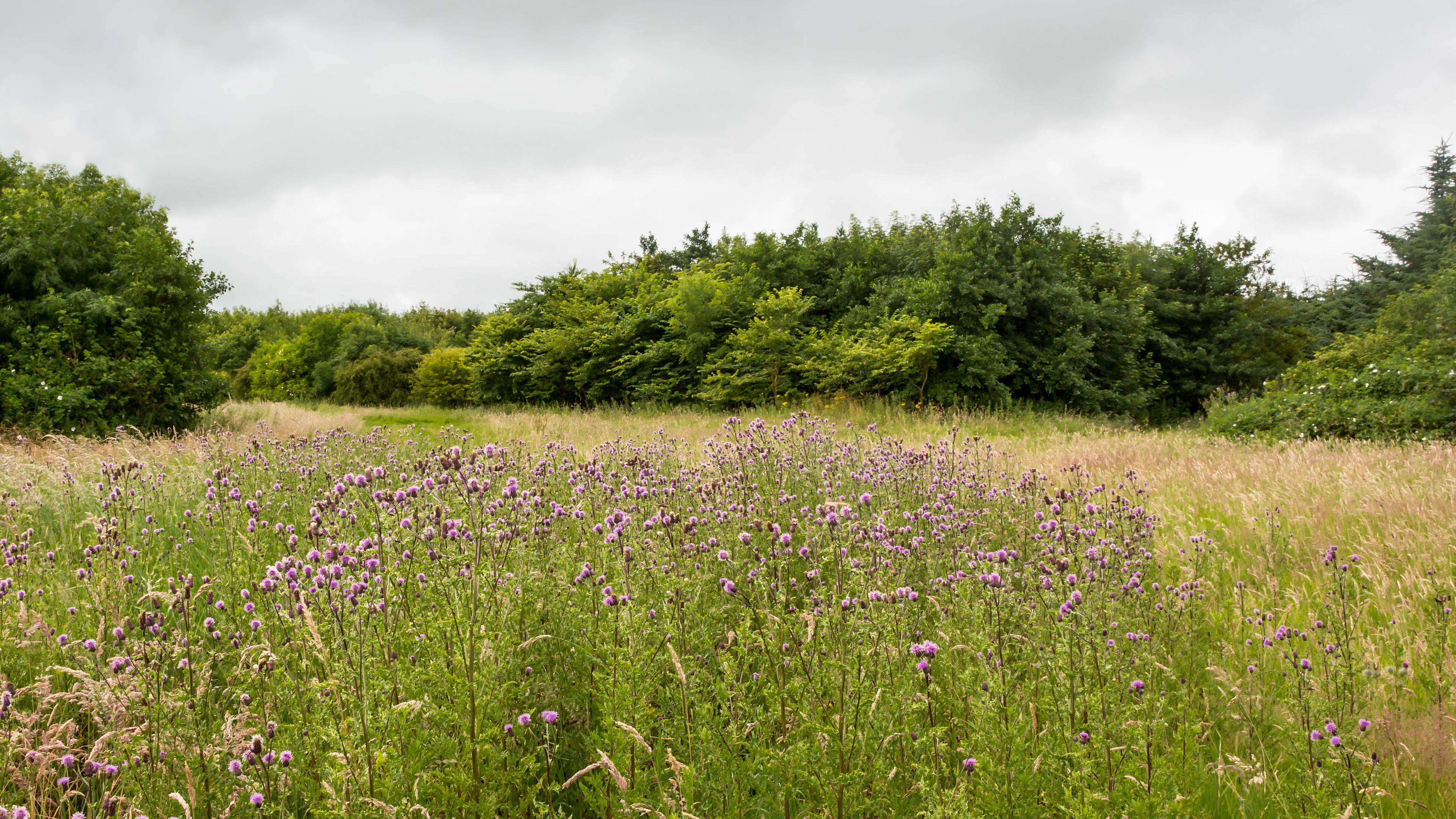 Buchan Meadows near Peterhead