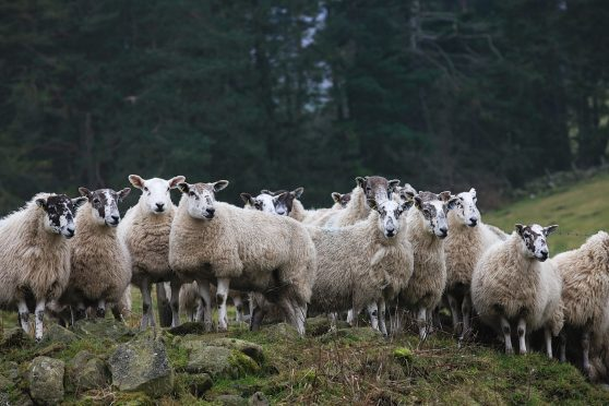 NFU Scotland has called on politicians to safeguard hill farmers and crofters.