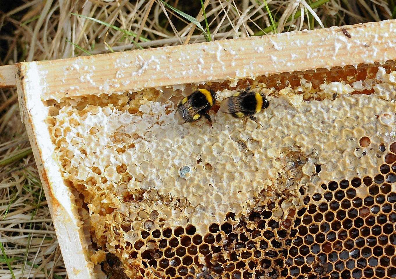 The study found agriculture had a positive impact on honey bee health