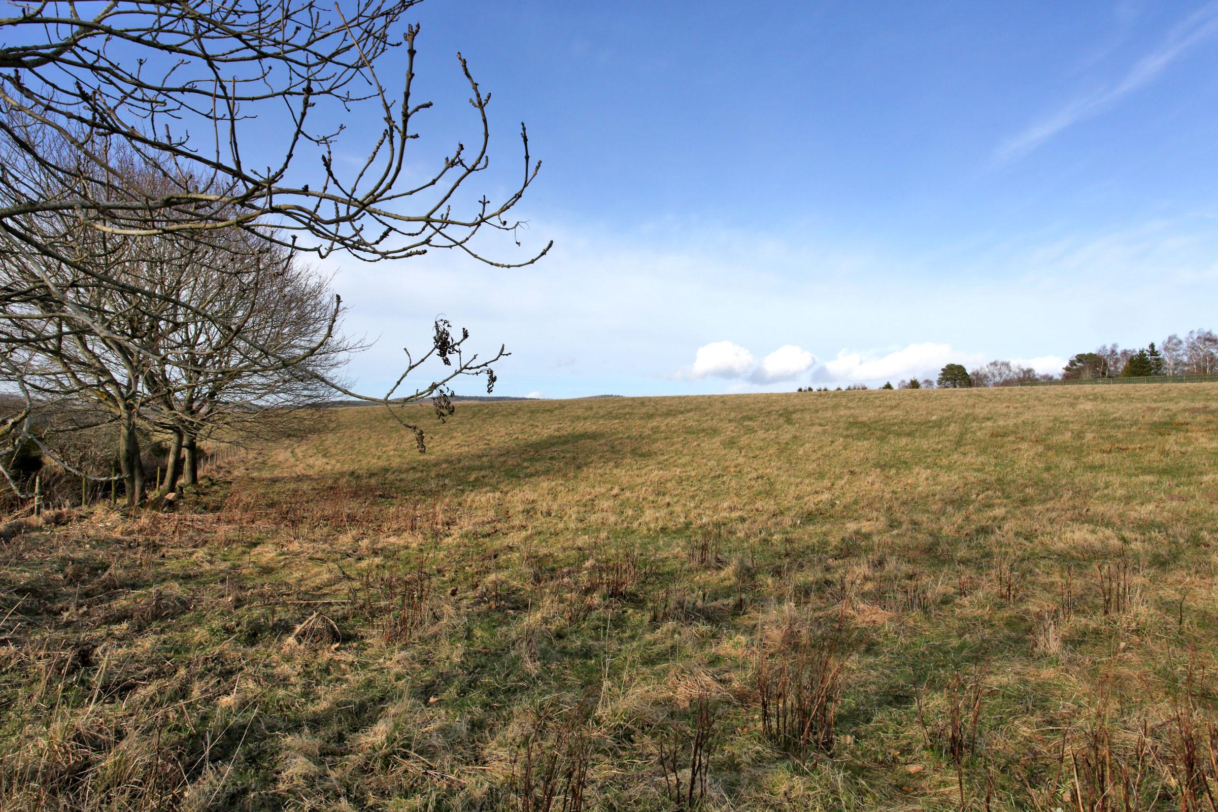 Hill of Beltie _ 3677 (16)