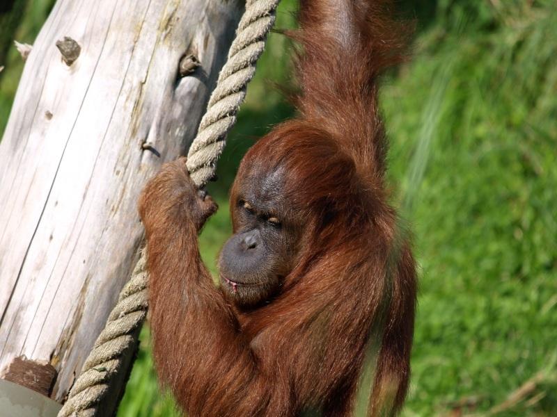 Jersey - Jersey Zoo