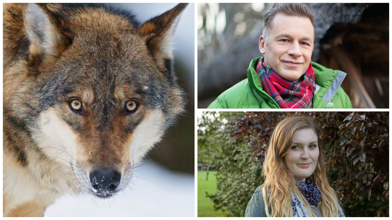 Lisa Marley's Project Wolf has won support from Chris Packham
