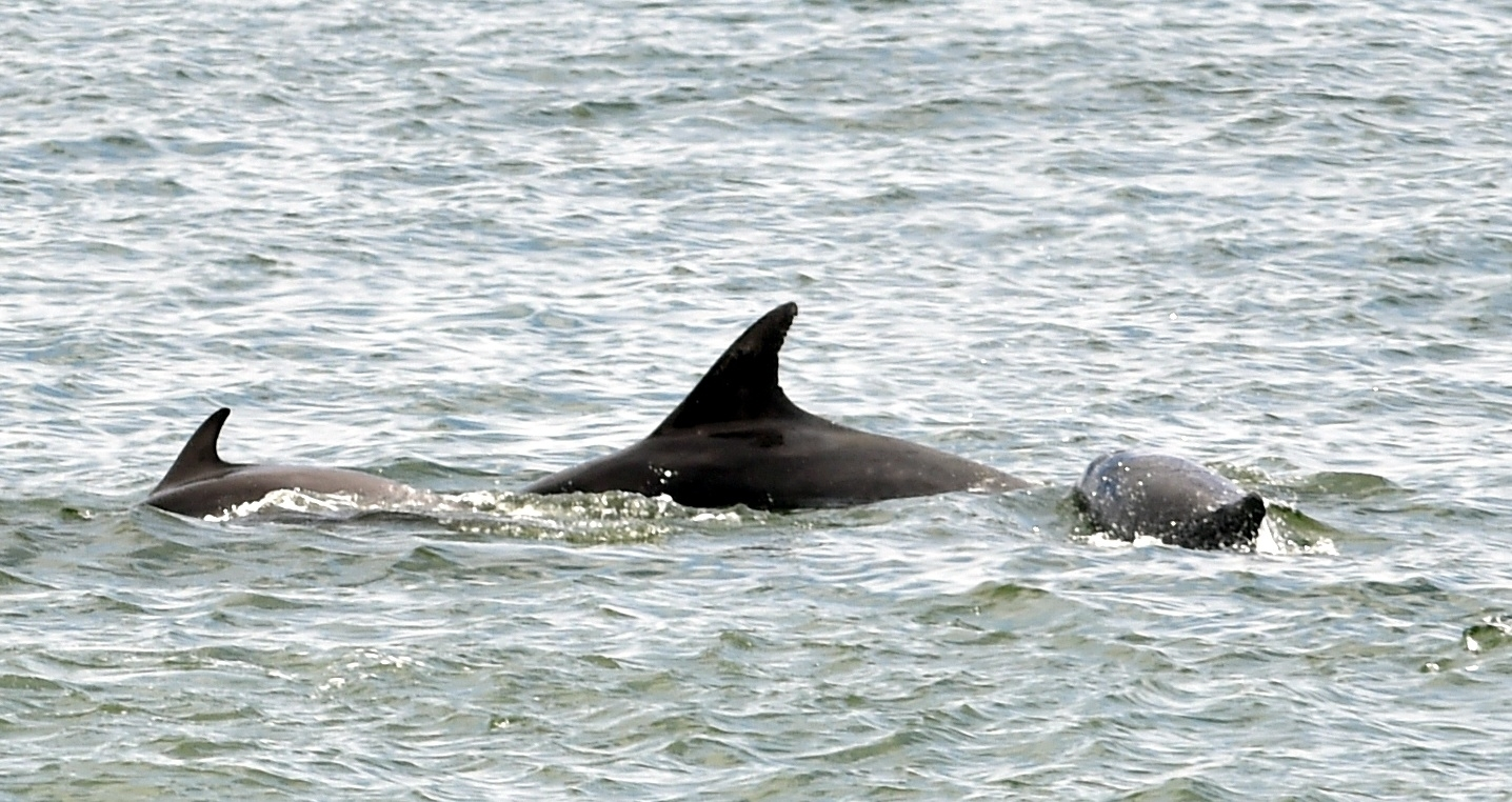 RSPB Dolphinwatch began its fifth year in Aberdeen. Picture by Colin Rennie.