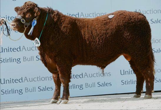 Drumaglea Kes sold for 12,000gn.