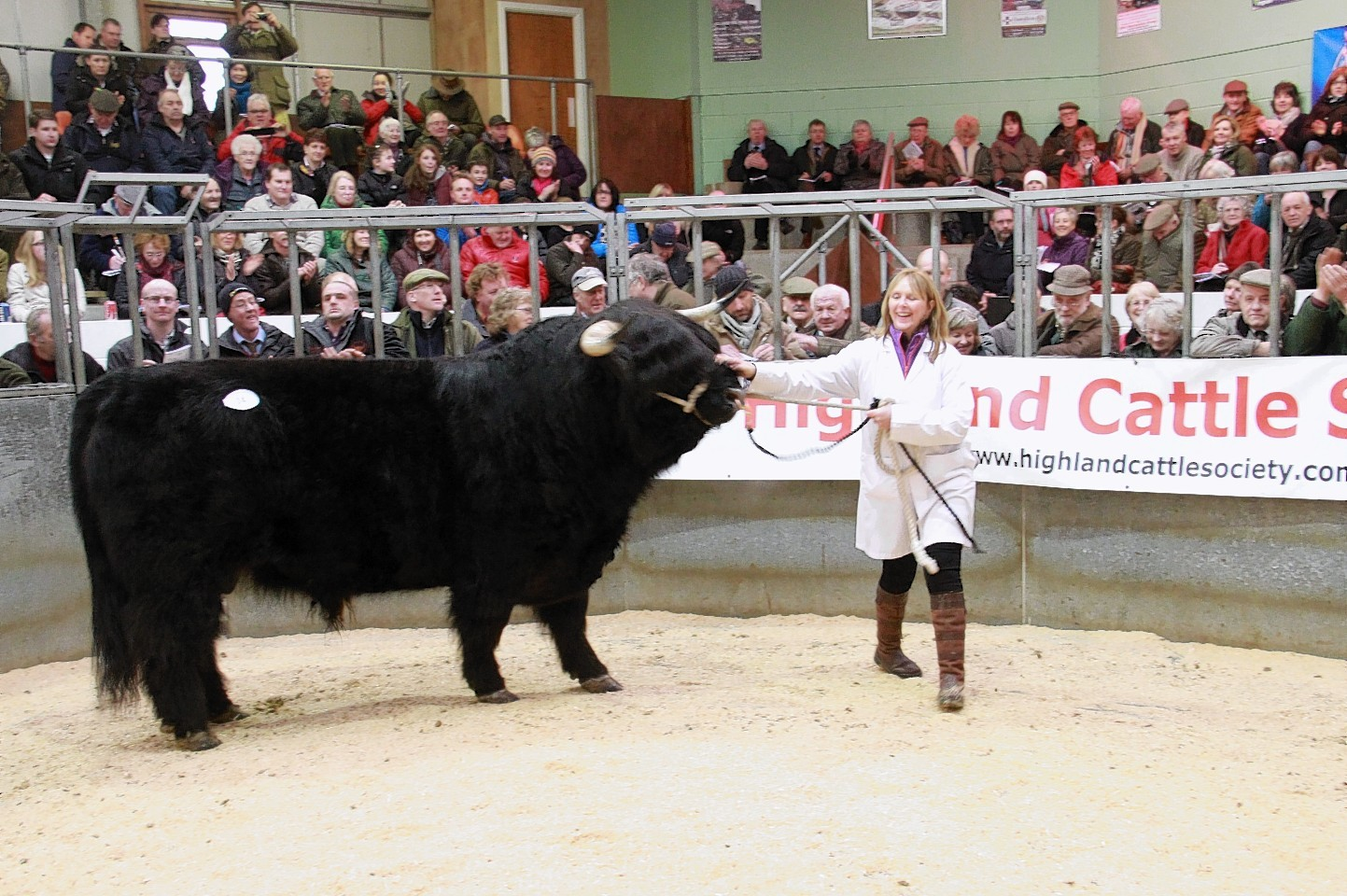 The mart at Oban stages pedigree Highland cattle sales.