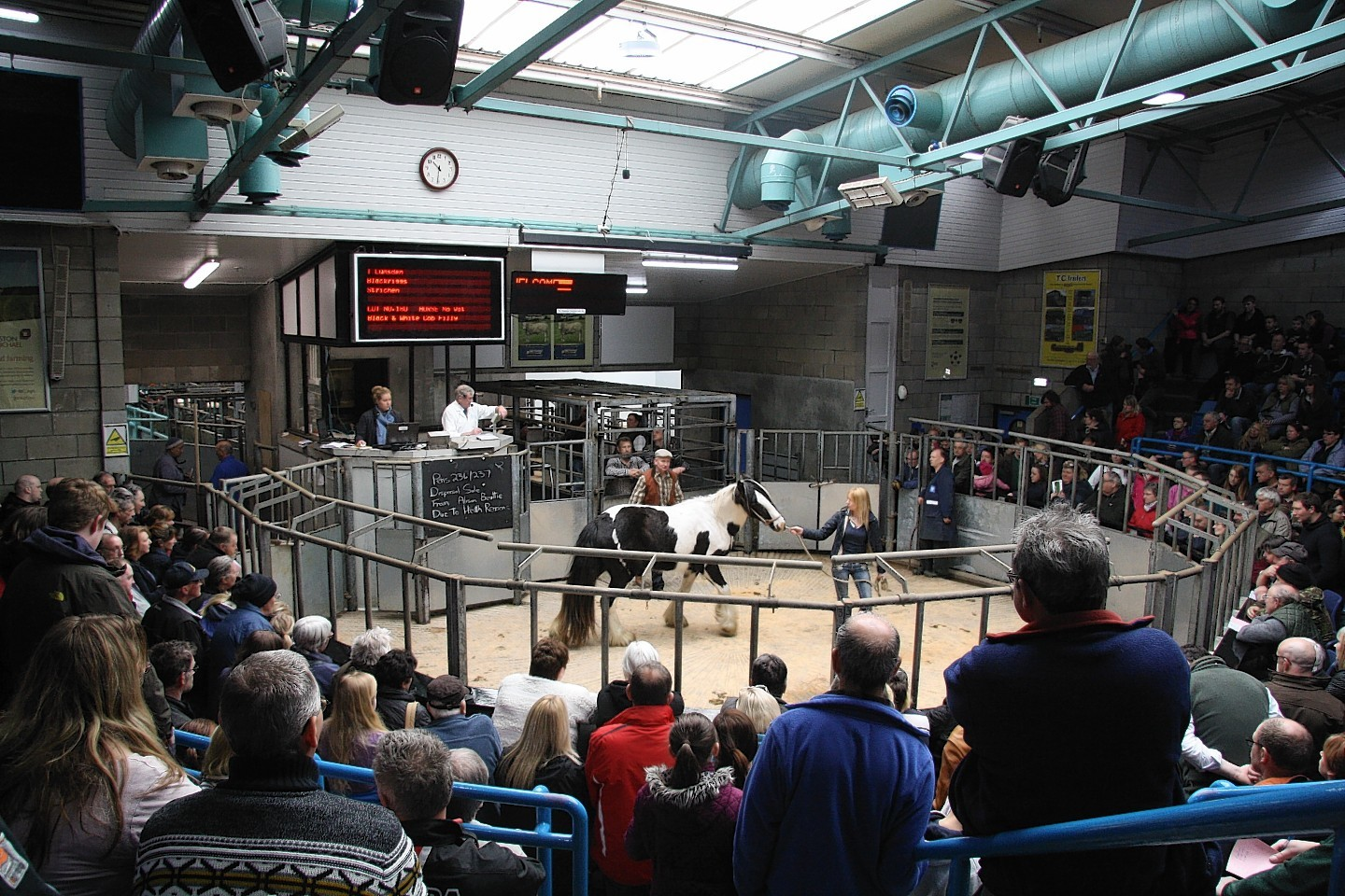 The rare breeds sale takes place on Saturday May 6