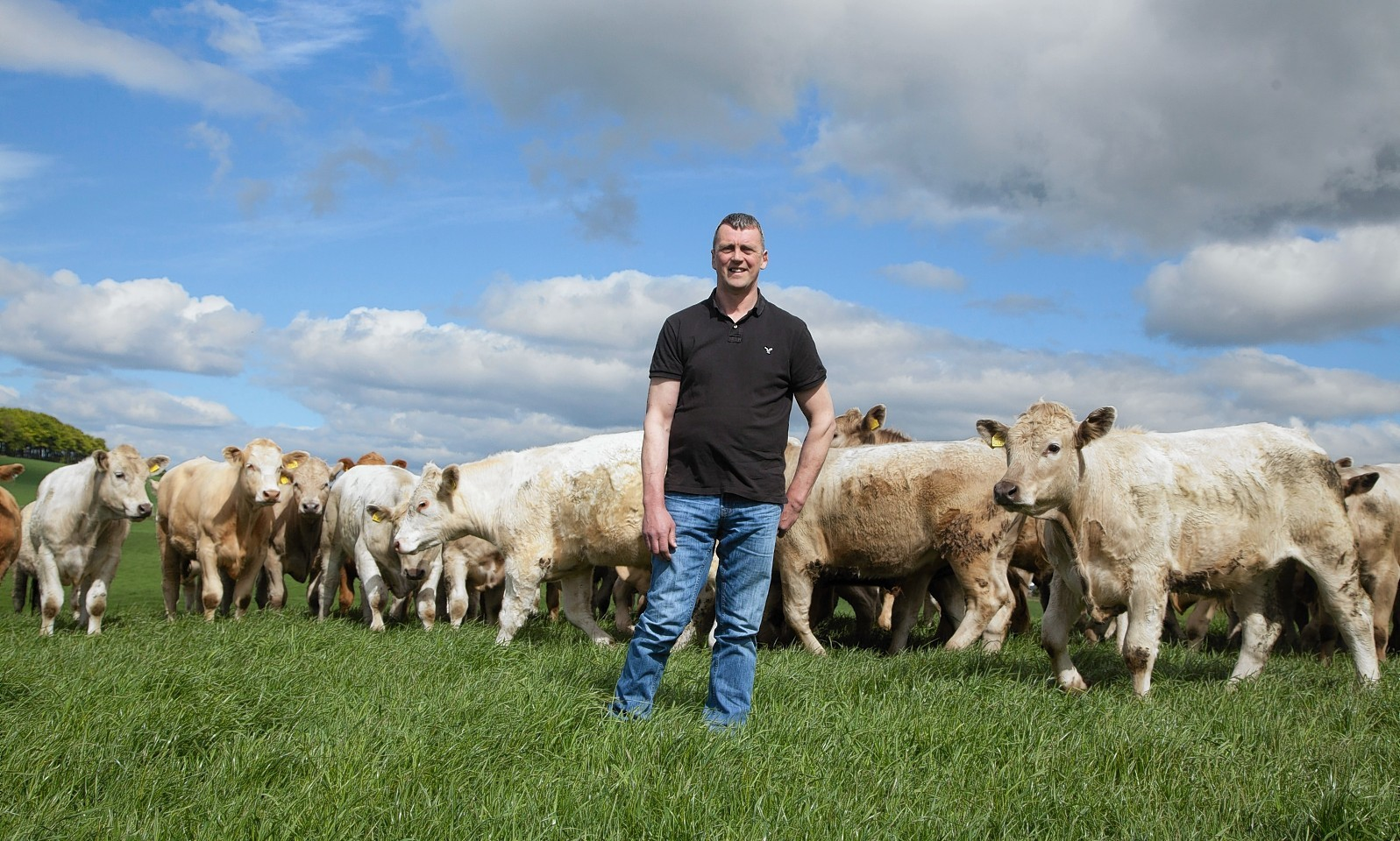 Alan Meston with some of his cattle.