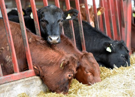 Mr Yuill said cattle EID could bring huge benefits to industry.